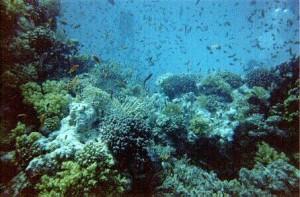 hurghada_reefs-20789