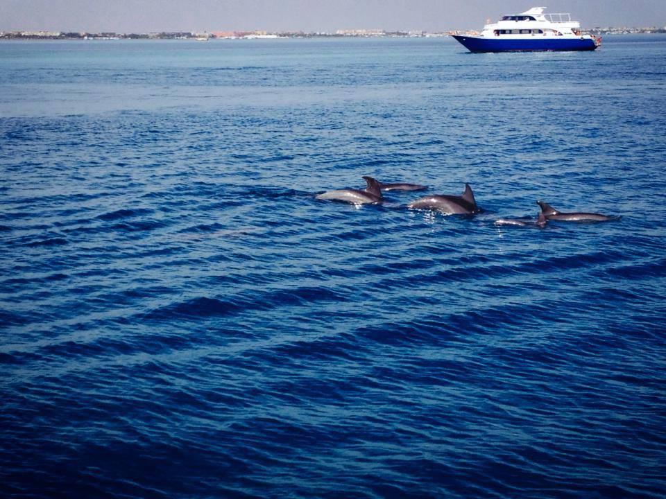 www.wycieczki-hurghada.pl Rejs statkiem do Domu Delfinów